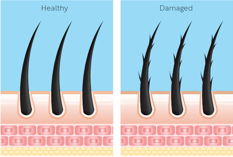 Healthy Damaged Hair